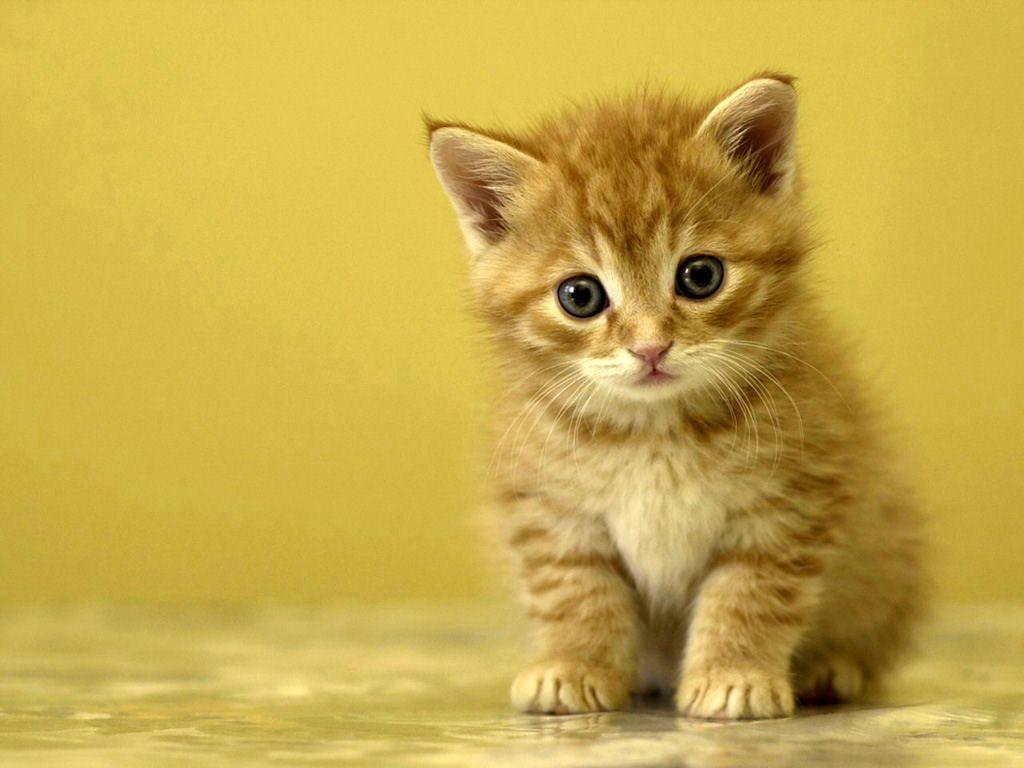 Riapre il museo del gatto, ma solo per la festa del felino